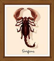 scorpione in cornice di legno