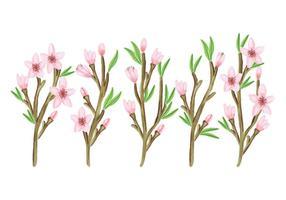 Raccolta di rami floreali vettoriali