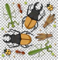 insieme di diversi insetti vettore