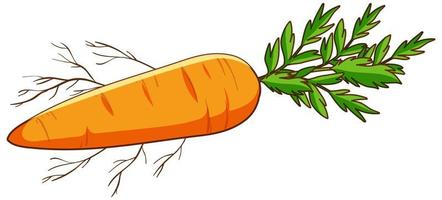 semplice carota su sfondo bianco