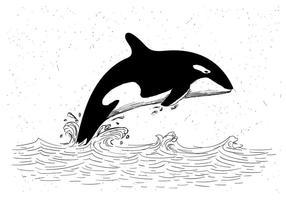Illustrazione disegnata a mano libera di balena di assassino di vettore