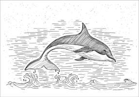 Illustrazione del delfino di vettore disegnato a mano