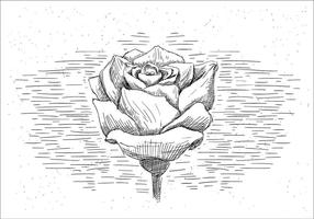 Vettore disegnato a mano libera Rosa