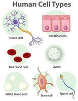poster informativo sulle cellule umane vettore