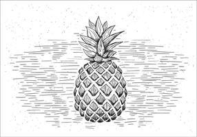 Illustrazione di ananas di vettore disegnato a mano libera
