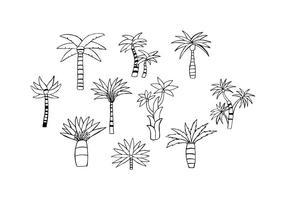 Vettore disegnato a mano libera della palma