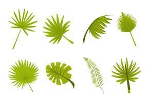 Vettore delle palme delle foglie tropicali