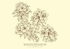 Vettori di fiori di rododendro disegnati a mano libera