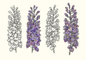 Illustrazione disegnata a mano di vettore del fiore di glicine