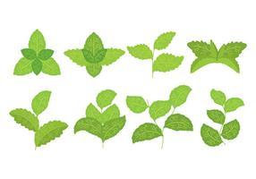 Icone di Stevia vettore