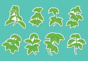 vettore di foglia di stevia