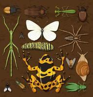 set di diversi insetti su sfondo carta da parati in legno