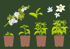 vettore di pianta di stevia