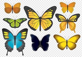 Farfalle colorate vettore