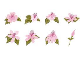 Vettore di rododendro fiore rosa gratis