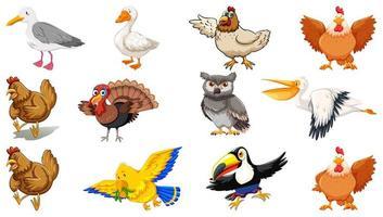 set di diversi uccelli in stile cartone animato isolato su sfondo bianco vettore