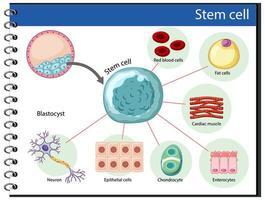 poster informativo sulle cellule staminali umane vettore