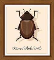 scarabeo nero africano nel telaio in legno