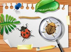 coccinella con scarabeo di patata del colorado e lente di ingrandimento sul tavolo si chiuda