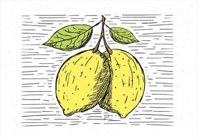 Illustrazione di limone di vettore disegnato a mano libera