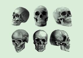 Vettore del cranio rotocalco