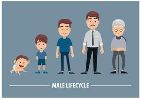 Vettore maschile del ciclo di vita