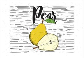 Illustrazione disegnata a mano di pera di vettore