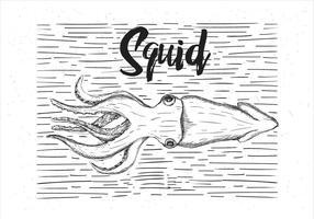 Illustrazione disegnata a mano calamari vettoriale