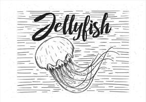 Illustrazione disegnata a mano delle meduse di vettore