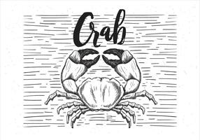 Illustrazione disegnata a mano libera del granchio di vettore