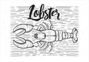 Illustrazione disegnata a mano dell'aragosta di vettore