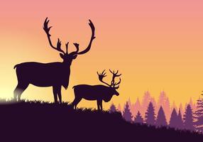 Caribou all'alba vettore