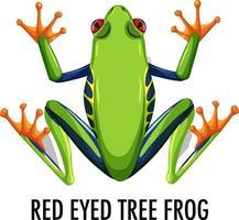 rana di albero dagli occhi rossi isolato su sfondo bianco