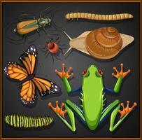 set di diversi insetti su sfondo nero vettore