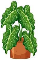 pianta in vaso con terreno isolato su sfondo bianco vettore