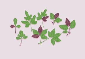 Vettore di colore verde di edera velenosa