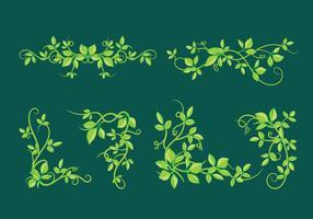 Bella edera di poisson con foglie verdi vettore