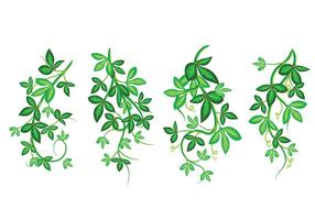 Insieme di bella illustrazione di arte di vettore, edera di Poisson con foglie verdi, modello incorniciato