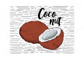 Illustrazione disegnata a mano libera della noce di cocco di vettore