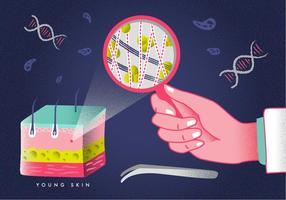 Illustrazione di vettore di istruzione di dermatologia di strato della pelle