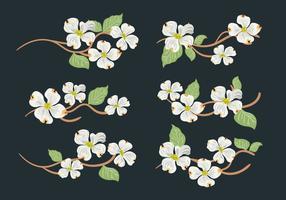 Raccolta di vettore del fiore di corniolo