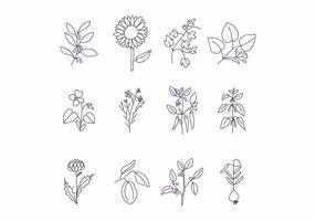 Set di bellissimi fiori vettore