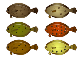 Realistico Flounder Vector