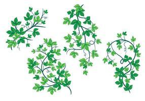 Foglie verdi teneri dei vettori della pianta dell'edera di veleno