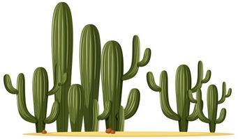 diverse forme di cactus in un gruppo vettore