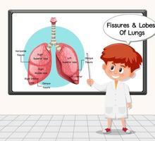 giovane scienziato che spiega fessure e lobi dei polmoni davanti a una tavola in laboratorio vettore