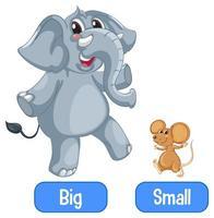 aggettivi opposti parole con grande e piccolo vettore