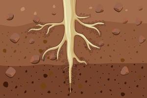 primo piano delle radici delle piante nel suolo vettore