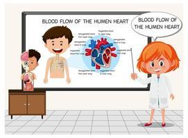 giovane scienziato che spiega il flusso sanguigno del cuore umano
