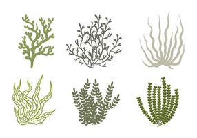 Icona di vettore di mare Weed